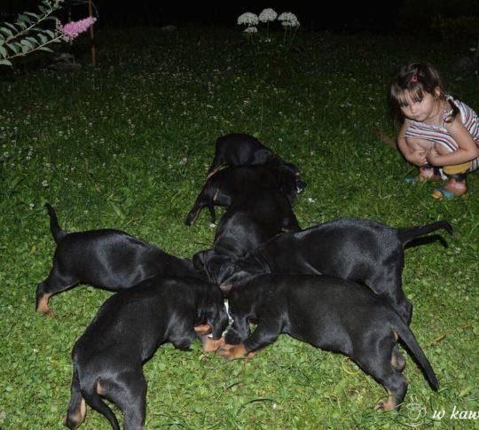 jaka rasa psa dla dziecka