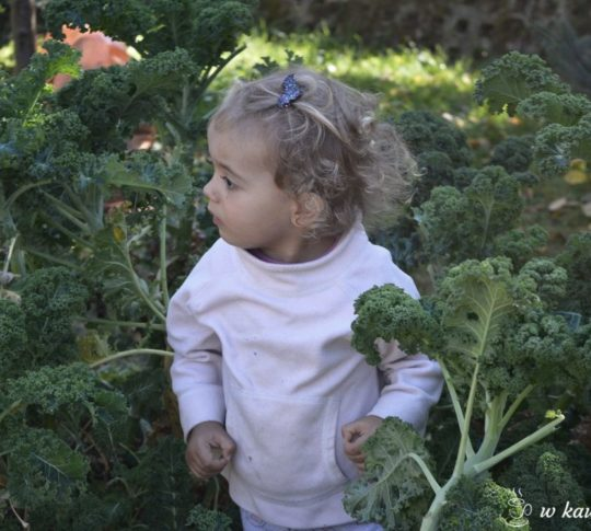 alergia pokarmowa co jeść